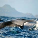 images/GALLERIA/WHALE WATCHING/whale2.jpg